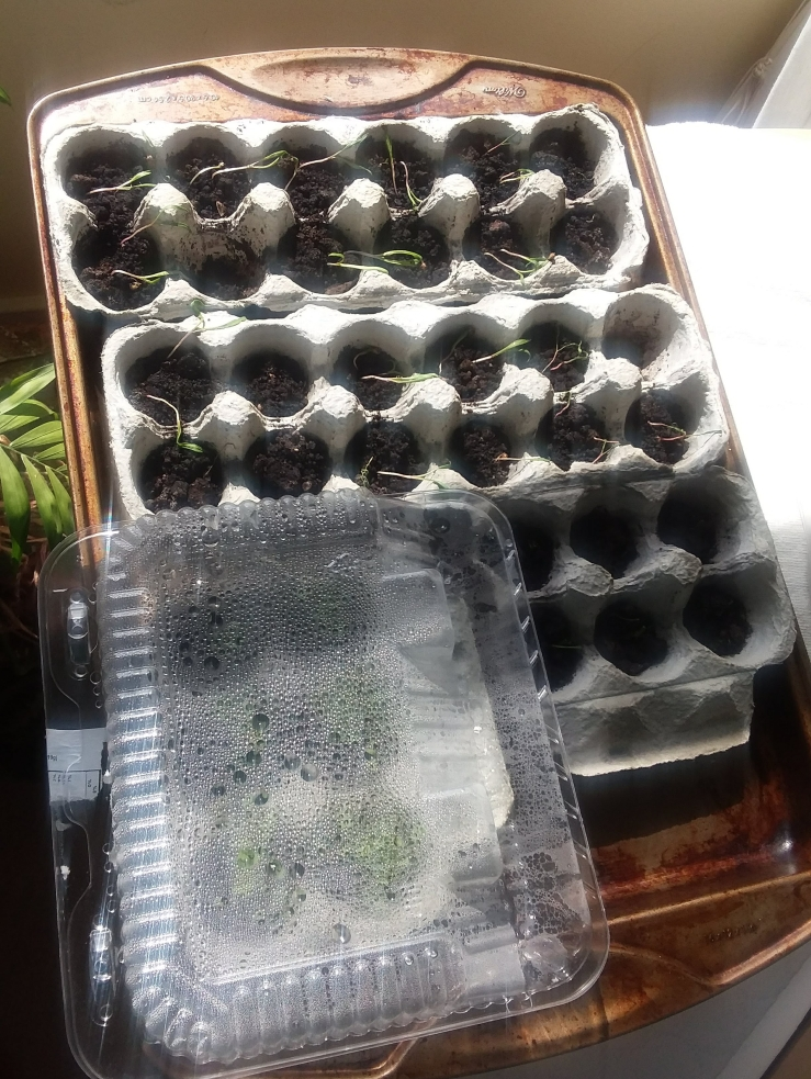 seedlings_2a_2018.jpg
